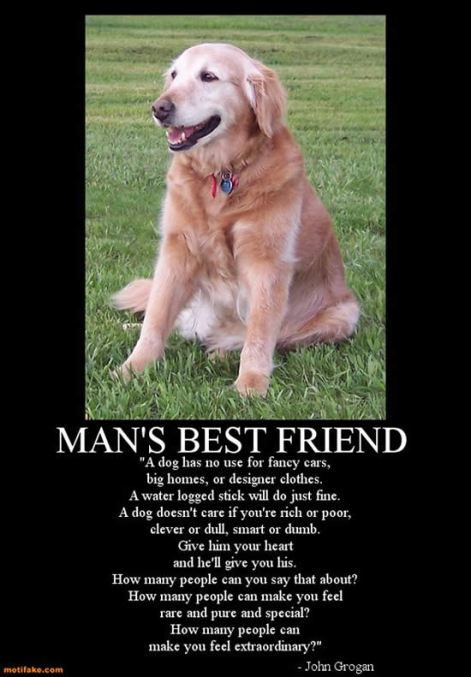 dogs_mans_best_friend_1