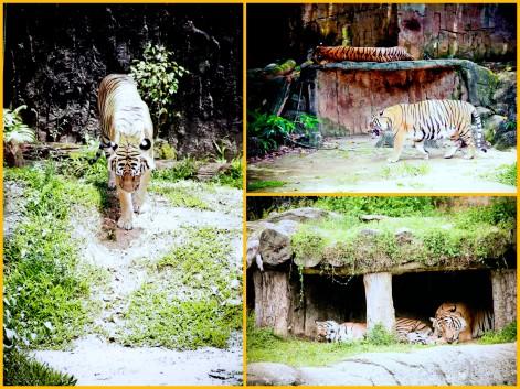 Zoo Melaka1